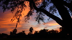 January Sunset (Jim Mullhaupt) Tags: sunset sundown dusk sun evening endofday sky clouds color red gold orange pink yellow blue tree palm outdoor silhouette weather tropical exotic wallpaper landscape nikon coolpix p900 jimmullhaupt cloudsstormssunsetssunrises manateecounty bradenton florida photo flickr geographic picture pictures camera snapshot photography nikoncoolpixp900 nikonp900 coolpixp900