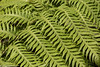 Greenery (Thad Zajdowicz) Tags: zajdowicz sanmarino california macro closeup object availablelight lightroom canon eos 5dmarkiii 5d3 dslr digital outdoor outside usa plant fern leaves fronds ef70200mmf4lisusm nature pattern color green colour
