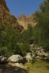 Wadi Arugot (rknecht) Tags: canonefs24mm canon650d eau water nature paysage landscape oasis israel rocks roche eingedi wadi arugot parc park travel voyage holidays vacances hiking randonnée désert desert