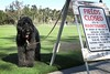 """""""The very, very rude sign!""""   by Benni Girl (Bennilover) Tags: soccerfield signs bad dog dogs lacrosseball labradoodle benni fun playing running bennigirl 52weeksfordogs sign warning"""