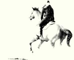 Freedom... (Daisy joss / No present) Tags: cheval