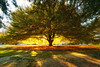 Autumn Light (jenkwang) Tags: hagley park pentax k1 samyang 14mm f28 landscape autumn golden new zealand christchurch