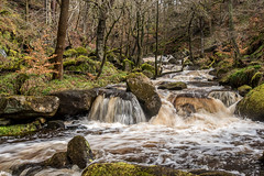 2018-04-03 PG-1390222.jpg (Hands in Focus) Tags: woodland derbyshire moss lumixfz1000 peakdistrict water padleygorge burbagebrook