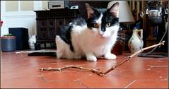 ça dépote et ça rempote sur le balcon ! (Save planet Earth !) Tags: cat chat amcc todd animal