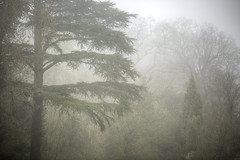 Trees In The Mist (mak_9000) Tags: