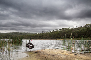 Cloudy afternoon at Manly Dam