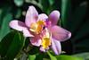 GDM_1024.jpg (GDMetzler) Tags: garden chicagobotanicalgaden spring flowers d500 nikon tamron gdmetzler illinois greenhouse