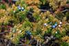 Mt Abraham gully,  Banff National Park (aud.watson) Tags: canadianrockies albertasrockies banffnationalpark highway11 davidthompsonhighway northsaskatchewanriver mtabrahamgully mountain mountains valley valleys peaks cliffs glacialvalley lake water glaciallake forest wood tree trees conifers pine pines fir spruce bighorncountry gully canyon erosion stream canyonwalls juniper juniperberries landscape