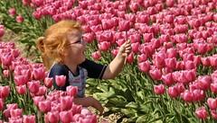 I picked a tulip !!!! (wilma HW61) Tags: portret portrait tulpen tulips tulipa tulipes tulpe tulipe roze pink meisje girl kind child noordoostpolder bollenvelden tulpenveld bulbfield tulipfield champdetulipes campoditulipani tulpenfeld flevoland nederland niederlande netherlands nikond90 natuur nature natur naturaleza holland holanda paysbas paesibassi paísesbajos europa europe outdoor wilmahw61 wilmawesterhoud voorjaar lente spring primavera printemps frühling