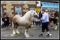 IMG_0416 (Scotchjohnnie) Tags: applebyhorsefair2018 applebyhorsefair applebyinwestmoorland appleby cumbria romany travellers gypsy equine people horse animal mammal canon canoneos canon7dmkii canonef24105mmf4lisusm scotchjohnnie streetphotography streetscene