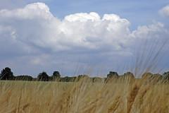 Landschaft (petra.wruck) Tags: landschaft landschaften landscape landscapes