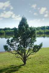 tree 2018-06-17 (avflinsch) Tags: ifttt 500px lake grass tree idyllic lush foliage pond park meadow scenery sunrise copse standing water