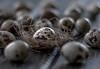 (..Ania.) Tags: eggs quaileggs nest 9somethingthatbeginswithq 52in2018