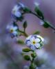 Violet Spiral (Marcello Velasco) Tags: flowerphotography macrophotographer macrophotography macro macrophotograph flower