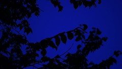 Blue (Josh Rokman) Tags: nikond7000 nikond7000video trees sunsettrees nature naturevideo outdoorsvideo blue bluesky hdvideo dslrvideo slrvideo musicvideo electronicmusic
