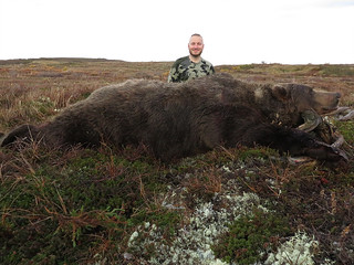 Alaska Brown Bear Hunt - Peninsula 1