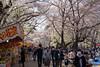"Omiya Park ""大宮公園"" in the season of cherry blossoms (junjunohaoha) Tags: nikon d610 omiya saitama japan cherryblossoms"