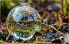 Die Natur steht Kopf (rockheadz) Tags: glaskugel natur wald bach blätter sonyalpha6300