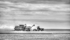 Unloading on the go (nwitthuhn) Tags: wheatharvest hdr photomatixpro monochrome bw case combine jd tractor tonemapped