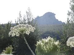 (Joan Pau Inarejos) Tags: flor flores montañas luz andalucía córdoba carcabuey 2018 verano vacaciones españa spain subbética