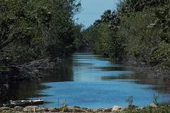 A Closer Look (ACEZandEIGHTZ) Tags: canal water trees plants everglades big cypress florida nikon d3200 birddog road nature