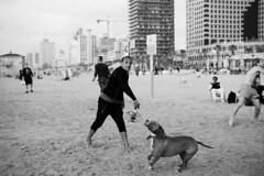 Beach Games (michael.mu) Tags: beach leica m240 50mm leicaaposummicronm50mmf2 telaviv dog game streetphotography bw blackandwhite monochrome