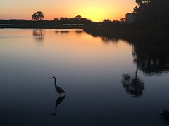 Serenity (cliffordswoape) Tags: o'beautiful usa stillness still fishing heron placid florida panamacitybeach lagoon sunset
