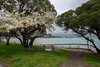 Blossom Time (Jocey K) Tags: newzealand nikond750 southisland akaora bankspeninsular landscape akaoraharbour hills buildings blossom trees beach boats clouds sea