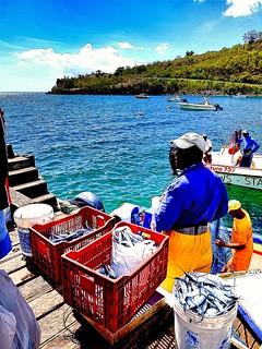 Retour des pêcheurs de balaou #Guadeloupe #Guadeloupeforever #ansealabarque #basseterre #fishermen #balaou #sea #sun #sunnysky #blue #colours #carribeanlifestyle #carribean #caraïbes #travel #vacation #lifestyle #retourauxsources #roots #life #joy #photog