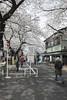 Tokyo.豊島区駒込 染井のさくら (iwagami.t) Tags: 201803 fujifilm fuji xt1 xf14mm japan tokyo city town urban street blossom