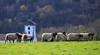 Pays Basque (FRANCOIS VEQUAUD) Tags: paysbasque 64 sudouest itxassou itsasu landscape countryscape