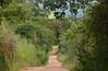 Caminho reto (Márcia Valle) Tags: interiordobrasil santanadodeserto natureza nature brasil outono autumn green verde trees árvores mataatlântica márciavalle nikon d5100 estrada road caminho