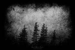 The woods (Mimadeo) Tags: dark landscape darkness tree trees scary mystery forest scenic woods wilderness black white blackandwhite pine pines shadow spooky mood moody atmosphere atmospheric copyspace creepy mysterious gloomy cold blackmetal grunge grungy texture textures textured background dirty scratches