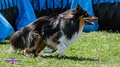 _DSC1205 (SeverX9) Tags: sony alpha 6500 70200gf4 dog run