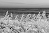 """The Gulf's Teeth"" (So Fluid) Tags: landscape landscapephotography water gulf birds sun morning color animal cool relaxing sofluid canon canonrebel sigma ocean sea sky beach sand blackandwhite blackandwhitephotography bw monochrome teeth"