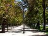 Entre árboles (0_miradas_0) Tags: parque forestal árbol pasto naturaleza cielo sombra calle farol ciudad santiago chile