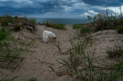 25/52 Nadja (utski7) Tags: 52weeksfordogs 2018 beach illinois lakemichigan