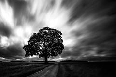standing tall... (Jess Feldon) Tags: leefilters tree longexposure blackandwhite sky clouds jessfeldon lookslikefilm leebigstopper countryside tetbury gloucestershire landscape cotswolds moody atmosphere