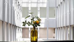 - Blaak House - (Jacqueline ter Haar) Tags: rotterdam blaakhouse v8 architects architecture atrium light v8architects delicate