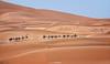 The caravan (Antoni Figueras) Tags: sahara morocco desert merzouga dunes caravan africa camels sonya7rii sony 70200 sand