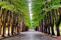 Shadow in the alley (gerard eder) Tags: world travel reise viajes europa europe italy italia italien toscana toskana tuscany lucca alley alle alameda arboles tree trees städte stadtlandschaft street streetlife city ciudades cityscape cityview urban urbanlife urbanview outdoor