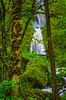cgorgeoregon-08 (shooteraz18) Tags: waterfall trees moss columbia river gorge oregon