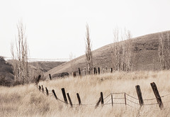 Remember a day before today (rowjimmy76) Tags: pnw pacificnorthwest vintage old fence rural westernunitedstates oldwest pastoral overcast cloudy landscape canon sl1 washington columbiahillsstatepark spring brown tawny yellow grassland tree sigma 18250mm