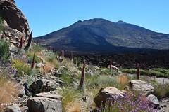 Tajinastes,Pico Viejo,Teide... (yayolorenzo) Tags: cañadas del teide