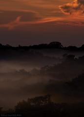 Sunset over the Amazon (pbertner) Tags: amazon ecuador landscape rainforest sanilodge saniproject2017 sunset yasuninationalpark