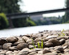 Willamette River (dsgetch) Tags: willametteriver autzen autzenfootbridge river oregonrivers bokeh depthoffield dof cascadia willamettevalley pacificnorthwest oregon pnwlife lanecounty pnw eugeneoregon