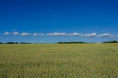 Midsummer clouds over Hittarp (frankmh) Tags: sky cloud field midsummer hittarp skåne sweden landscape farming nwn