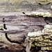 Charcoal Landscape VI