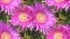 * Elba Island : Flowers everywhere * (argia world 1) Tags: fiori flowers isoladelba elbaisland macro colore colour giardino garden primavera springtime