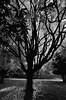 Sunlight & Shadows (RansomedNBlood) Tags: charleston capitol bw blackwhite nikond5100 sunlightshadows tree